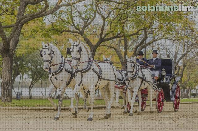 Review de doma enganches caballos