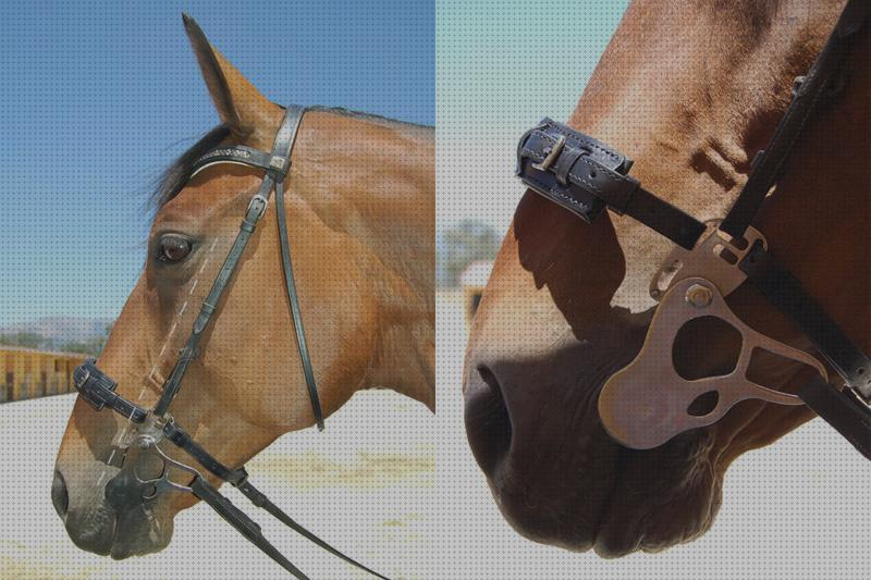 Review de embocadura caballo pleham
